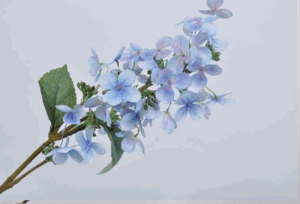 hortensia allongé type paniculata